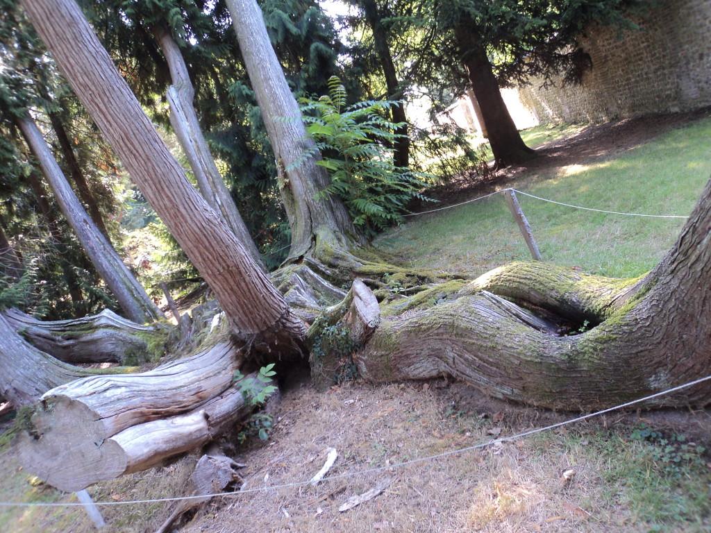 12)les arbres sont partout présents