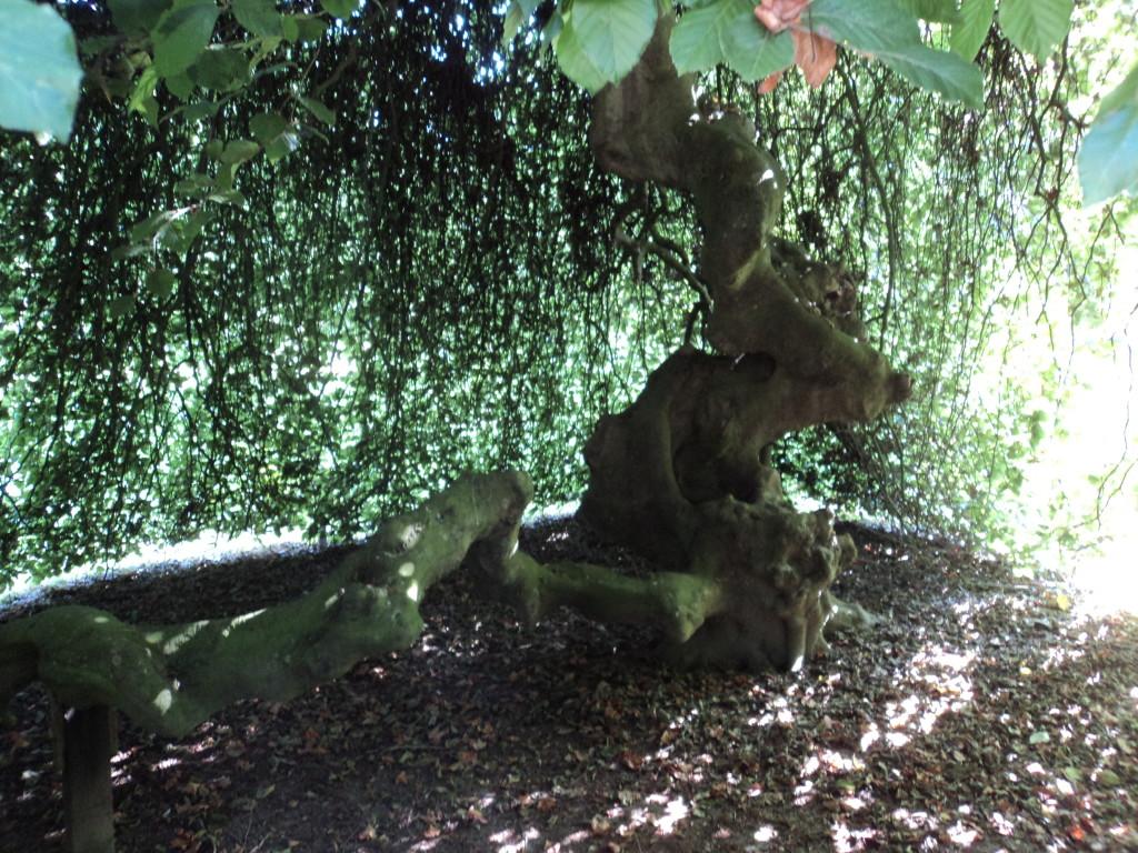 13)les arbres sont partout présents